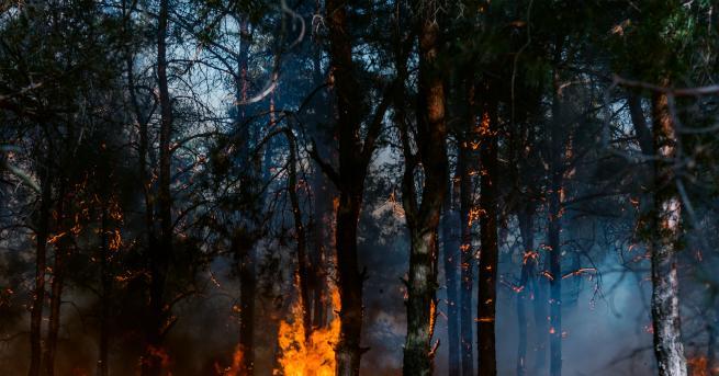 България Пожарите в Стара планина и Рила не стихват, пламъци