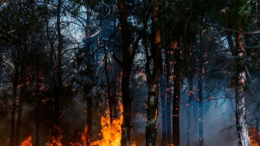 <p><strong>Пожарите </strong>не стихват, пламъци и от сръбска страна&nbsp; &nbsp;</p>
