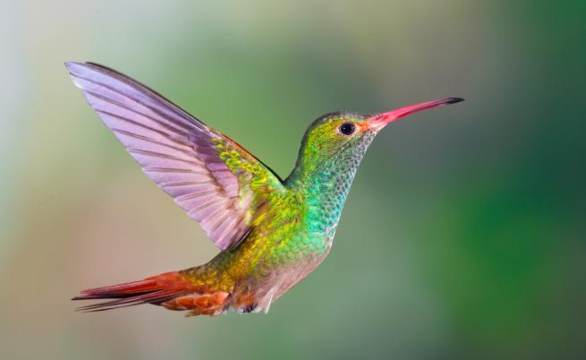 Какво не знаем за най-дребните птици в света (ВИДЕО)