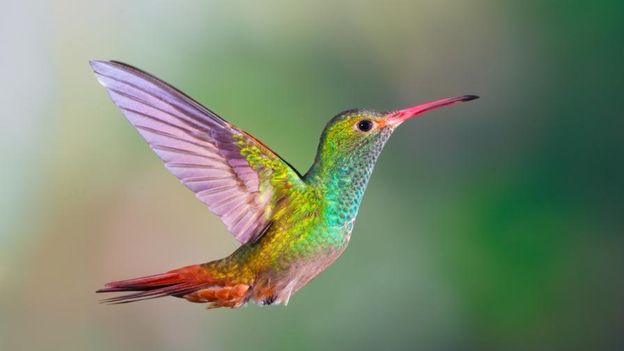 <p>Какво <strong>не знаем</strong> за най-дребните птици в света (ВИДЕО)</p>