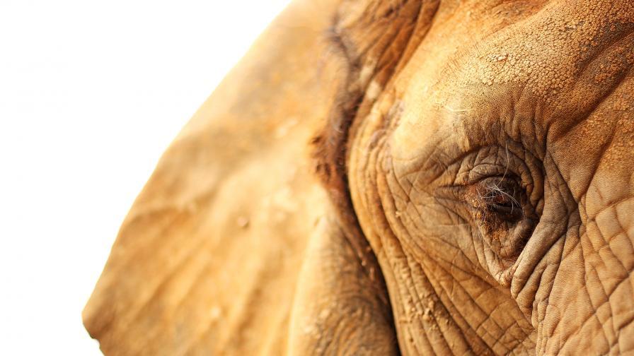 Mистериозна масова смърт на слонове в Ботсвана