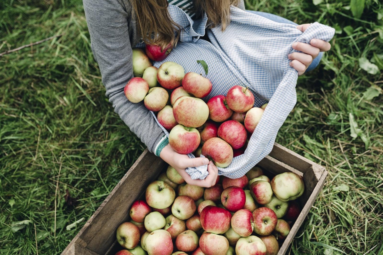 <p>Ще подобрите състоянието на стомаха си.&nbsp;Ябълките съдържат фибри, които балансират работата на червата и намаляват риска от заболявания.</p>