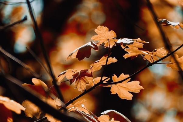 Лъчите на есента