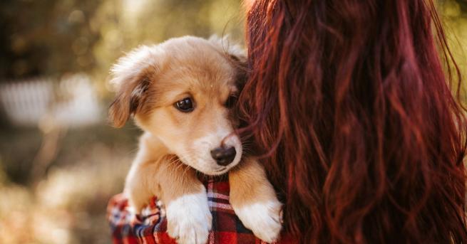 Любопитно Спасиха кученце с опашка на лицето Ветеринарите казват, че