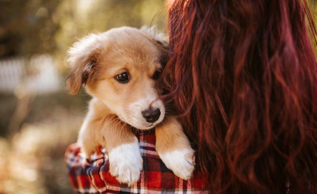Спасиха кученце с опашка на главата