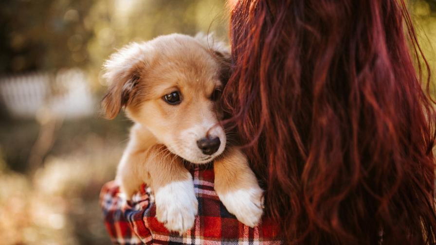 Какво не знаем за кучетата