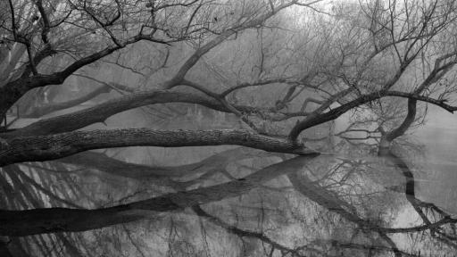 """""""Дихание"""" на гръцкия фотограф Джон Демос"""