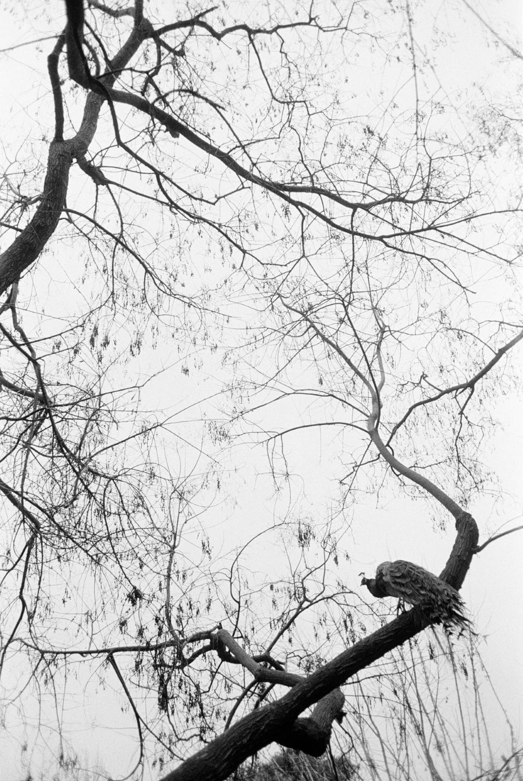 <p>&quot;Дихание&quot; на гръцкия фотограф Джон Демос</p>