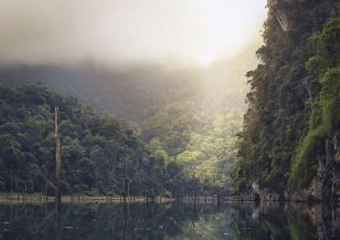 Рекордни нива на обезлесяване в Амазония