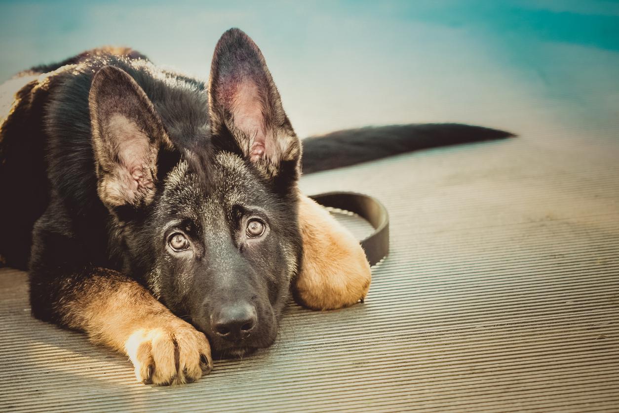 <p><strong>Не бързайте да поздравявате кучето</strong> - Има случаи, в които не можем да контролираме желанието да се приближим до кучето, за да го погалим. Специалист по дресировка на кучетата, споделя, че ако направим това рязко със сигурност ще изплашим кучето. Най-доброто нещо, което трябва да се направи, е да се подходи бавно и спокойно. По този начин кучето ще има време да се почувства в безопасност и ще знае, че няма да нараните него или стопанина му.<br /> &nbsp;</p>