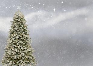 Коледното дърво в Лондон пристига от Норвегия