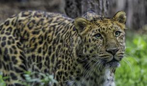 Най-застрашените от изчезване животни - Любопитно   Vesti.bg