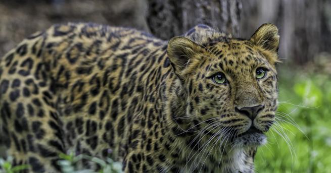 Любопитно Най-застрашените от изчезване животни Кои видове скоро няма да