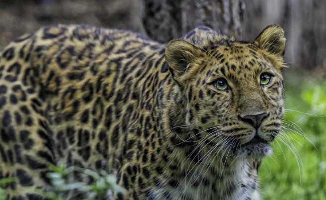Най-застрашените от изчезване животни