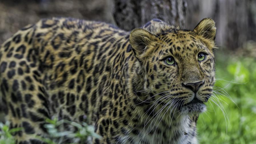<p>Най-застрашените <strong>от изчезване животни&nbsp;</strong></p>