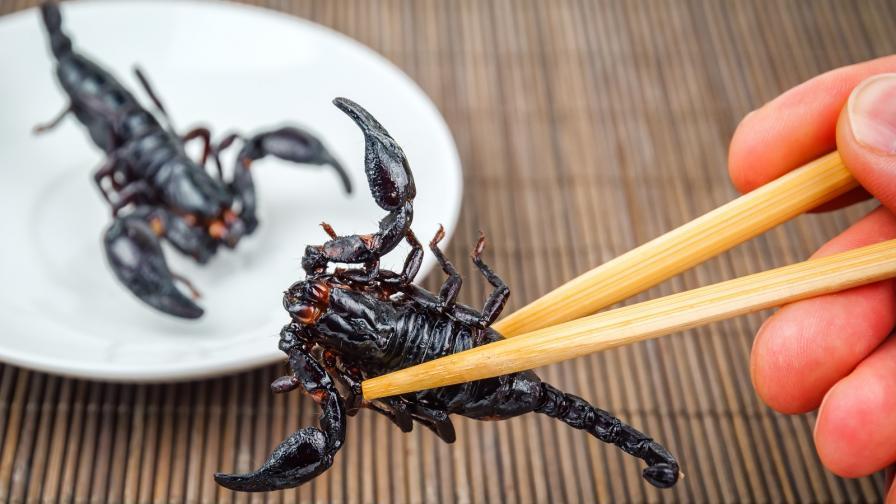 <p>Ресторант предлага ястия от<strong> скорпиони и тарантули</strong></p>