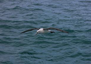 Ужасният живот на малките албатроси