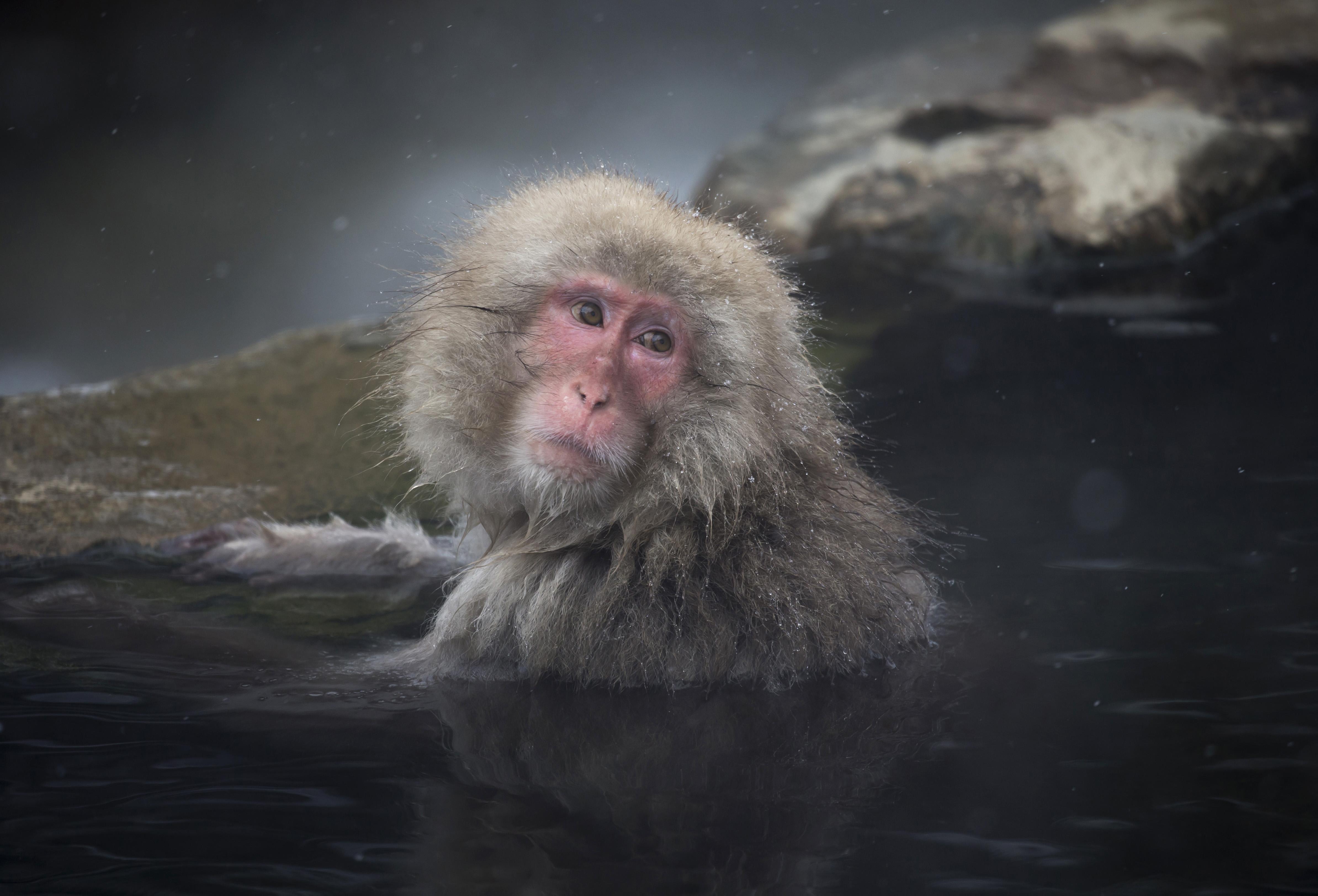 <p>2020 година ще бъде спокойна и благодатна година за всички хора, родени в годината на <strong>Маймуната</strong>. Хороскопът за Маймуната предвижда тази година да положите усилия, за да получите това, което искате. Важни промени могат да настъпят у дома или на работното ви място, така че трябва да сте подготвени. Бъдете сигурни, че трудностите, пред които ви изправя съдбата са от полза за вашето личностно развитие. Въпреки трудностите, 2020 ще ви подари нови и страстни взаимоотношения с роден под знака на Вола, Заека или Коня.</p>