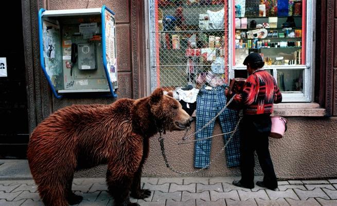 Танцуващата мечка Гошо беше една от спасените в парка, създаден с помощта на Четири лапи