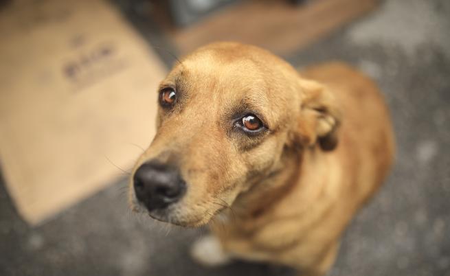 Доброволци спасиха кученце с отрязани крака и без око