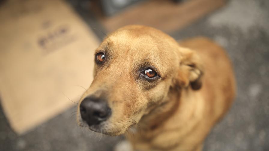 <p>Учени доказаха, че <strong>кучетата са способни да ни измамят</strong></p>