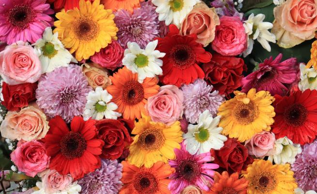 Защо цветята имат различни цветове?