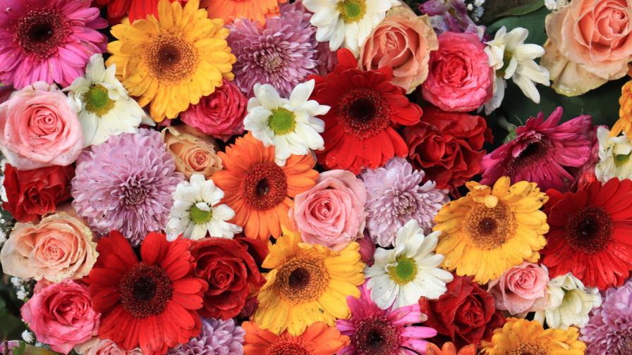 <p>Защо <strong>цветята </strong>имат <strong>различни </strong>цветове?</p>