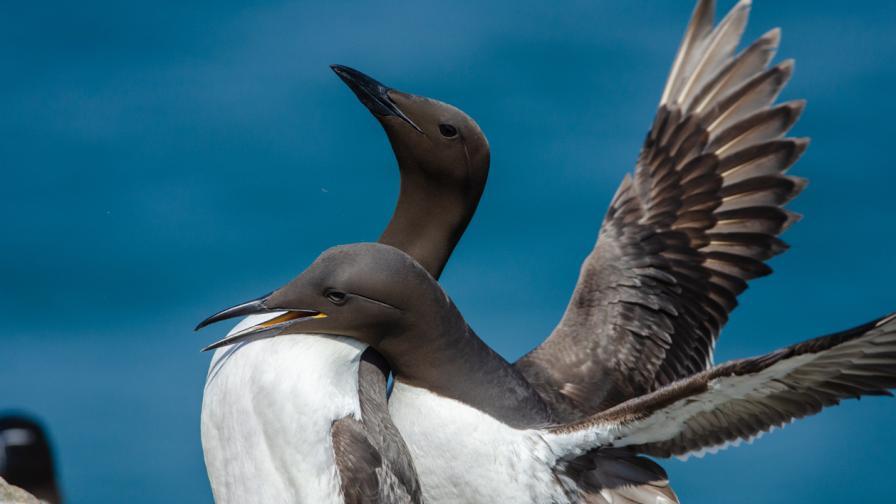 <p><strong>Топлинна вълна</strong> в Тихия океан е убила 1 млн.&nbsp;<strong>животни</strong></p>