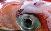 Тайните на най-чудовищното създание на океана