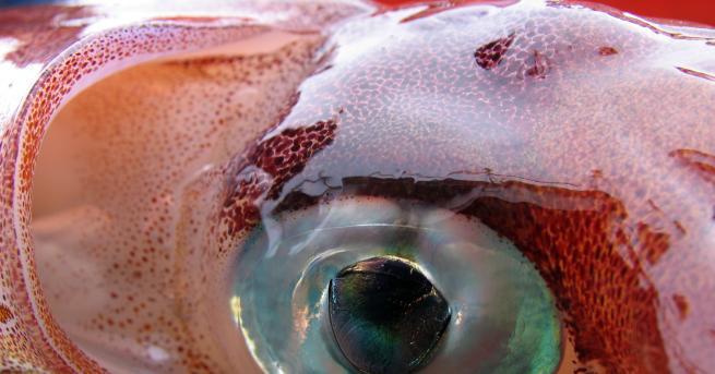 Свят Тайните на най-чудовищното създание на океана Създанието, което вероятно