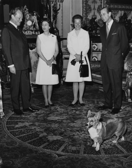 <p><strong>Кралица Елизабет Втора</strong></p>  <p>Любовта на кралицата към породата кучета <strong>Уелско корги пембрук</strong> е легендарна. На 18-ия си рожден ден тя получава от баща си корги на име Сюзън. От тогава до 2018 г. кралицата е имала <strong>общо над 30 коргита</strong>, които са били потомци на първото ѝ&nbsp;куче. През 2018 г., след като последното ѝ&nbsp;корги умира, кралицата решава&nbsp;да спре развъждането на корги заради възрастта си. Въпреки това тя <strong>все още се грижи за едно корги</strong>, което остава без собственик след смъртта на кралския&nbsp;пазач на дивеча.</p>