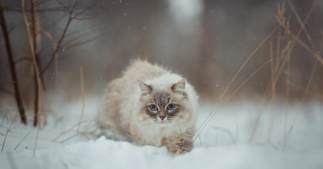 Любопитно Мъж спаси замръзнали котенца с помощта на кафе За