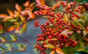 10 късметлийски растения, с които да украсите дома си