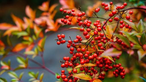 <p><strong>10 късметлийски </strong>растения, с които да украсите дома си</p>