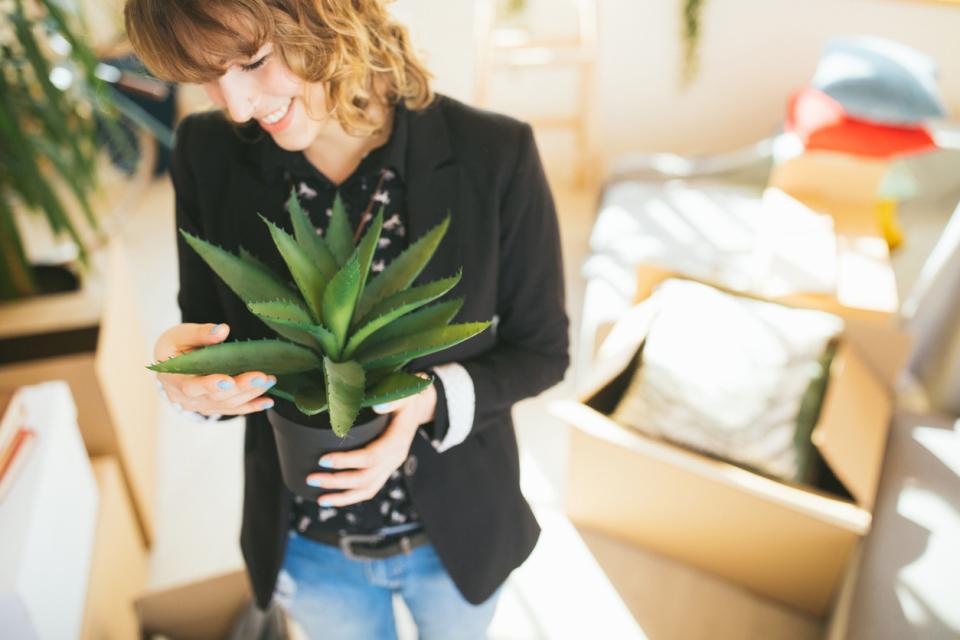 цвете растение алое вера