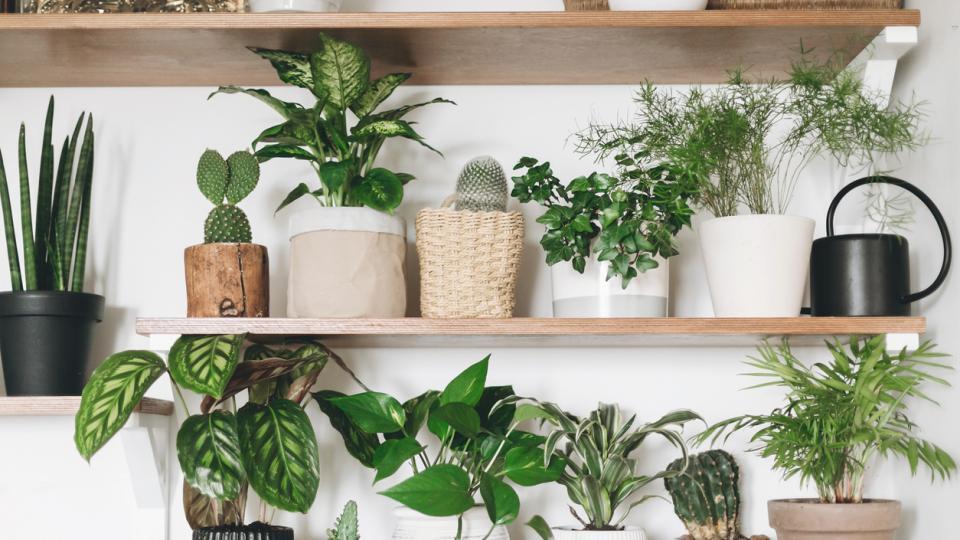 растения дом цветя