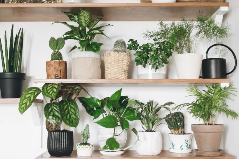 <p><strong>Стайни растения</strong></p>  <p>Растенията в дома ви наистина почистват въздуха и намаляват наличието на прах. Те обаче не абсорбират големи частици и се замърсяват сами с течение на времето. Натрупаният прах по тях влошава филтриращите им свойства и предотвратява нормалния поток на фотосинтезата. Количеството хлорофил в листата намалява, което кара цветето вече да не почиства въздуха, а да действа като прахоуловител. За да се предотврати това, растенията трябва периодично да се почистват.</p>