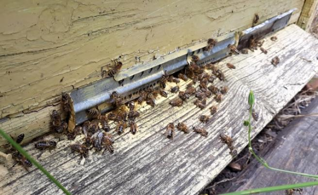 Пчели и пчеларство