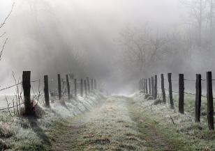 Със силата на природата срещу вирусите и настинките