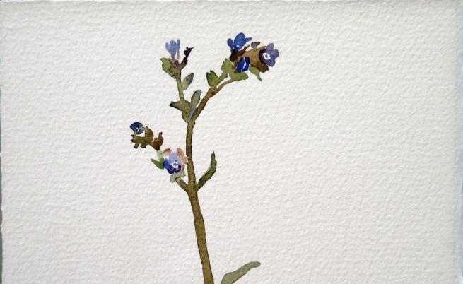 """""""Сънят на пчелите"""" от Геновева Рогова"""
