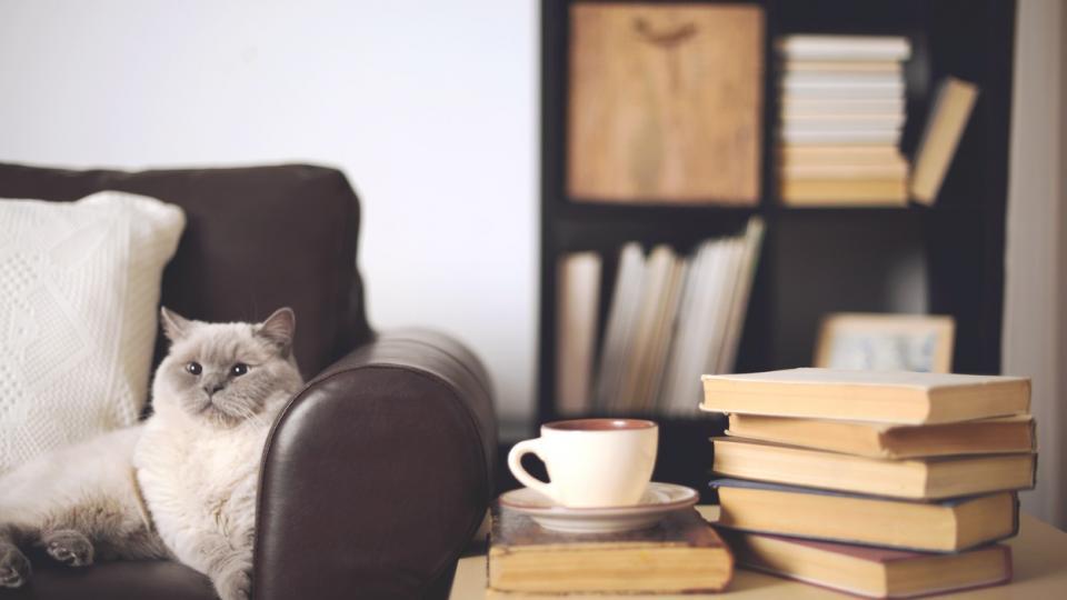 дом котка уют книги кафе
