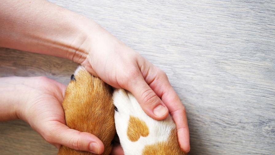 7 знака, че кучето ви обича безусловно