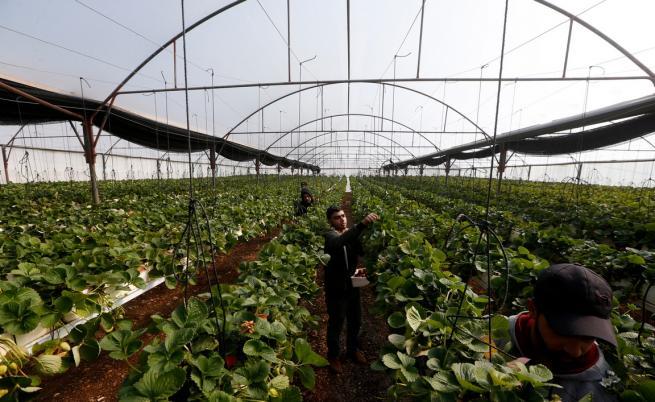 Великобритания опитва да уреди чартъри, за да докара сезонни работници