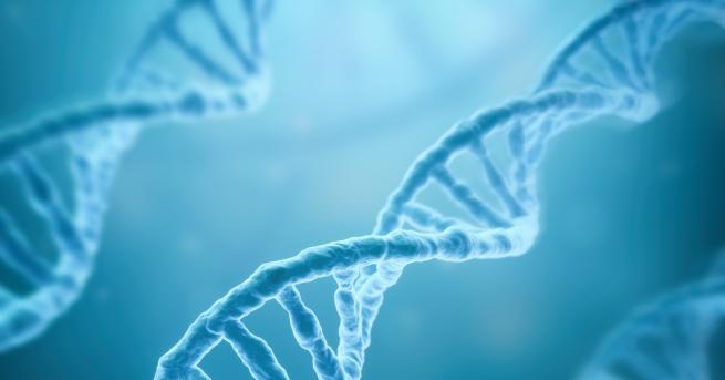 Любопитно Учени разработват ново лечение срещу диабет Техниката превръща човешки