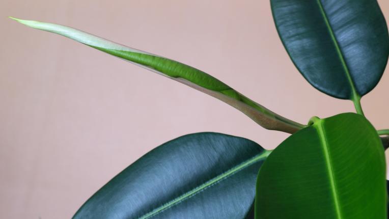 Стайните растения, които са полезни за здравето ни