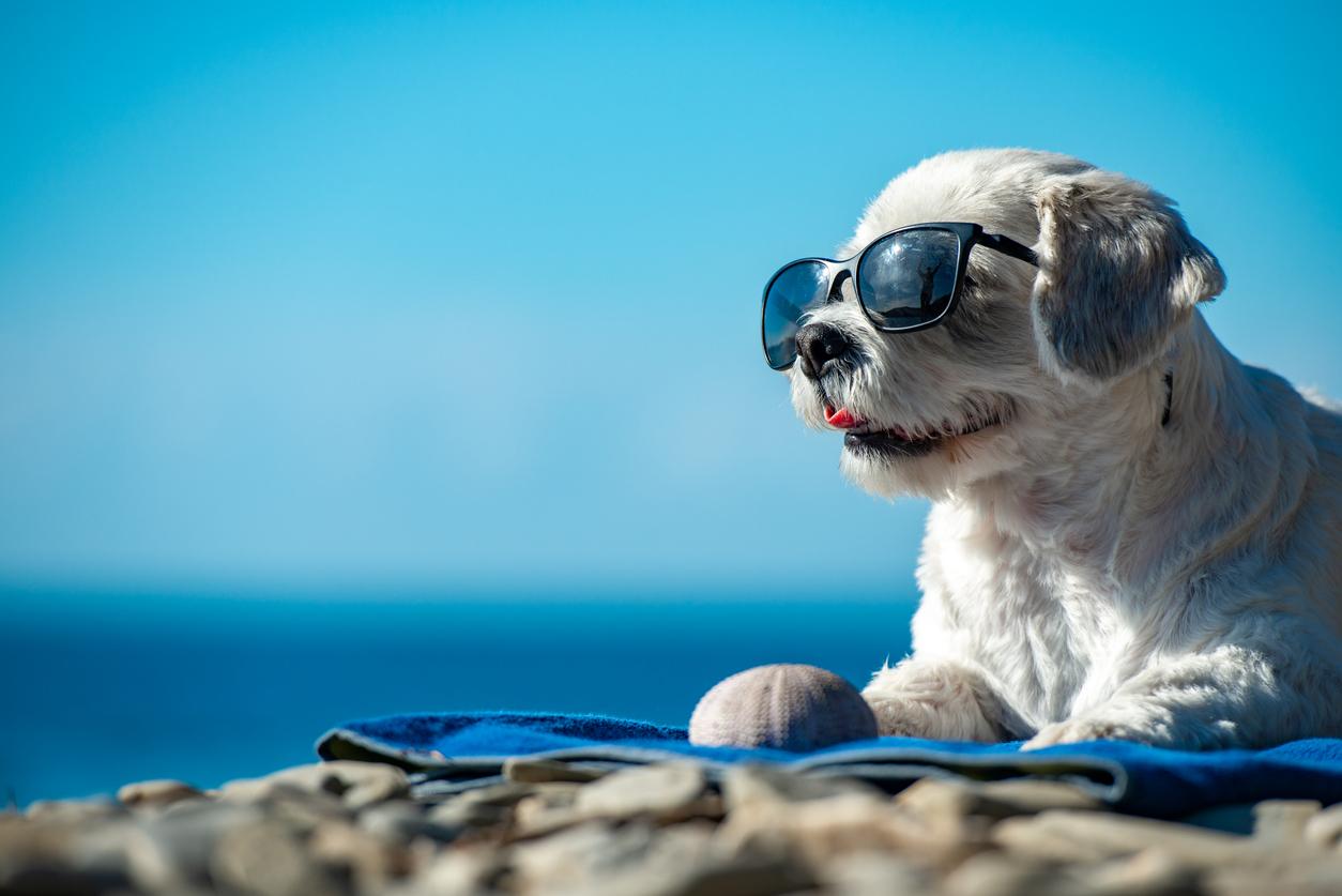 <p><strong>Слънчеви очила</strong></p>  <p>Функцията на слънчевите очила е да пазят очите ни от вредните UV лъчи. Да, но тази защитна способност на стъклата се губи с времето.</p>