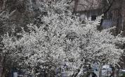 Времето днес - пролетно, предимно слънчево