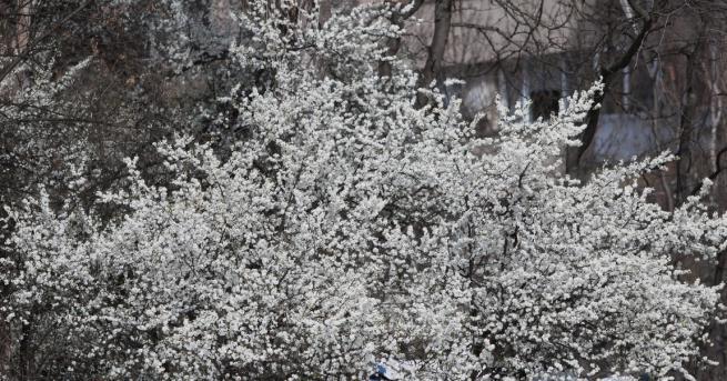 България Времето днес - пролетно, предимно слънчево Максималните температури ще