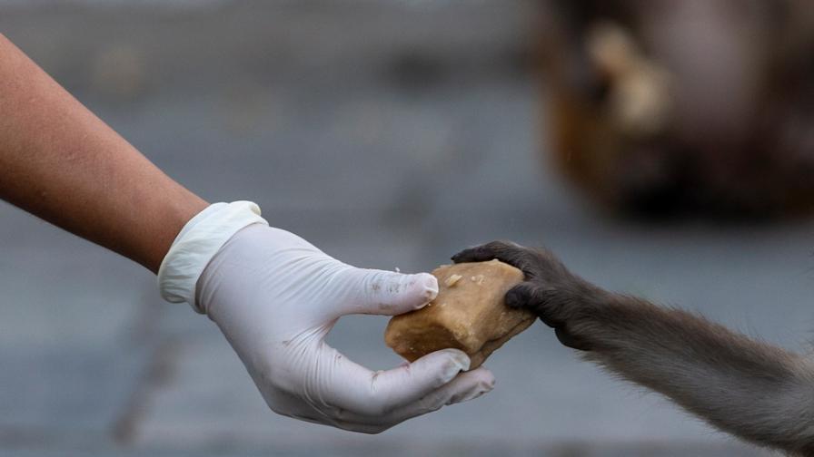 С грижа за животните