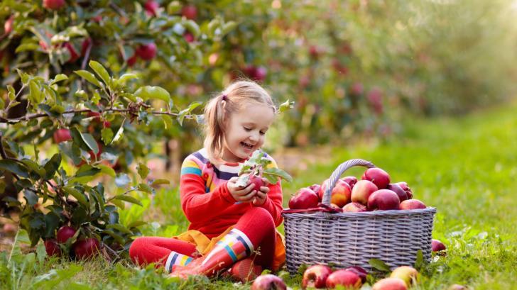 10 хранителни вещества, от които всяко дете между 5 и 8-годишна възраст се нуждае